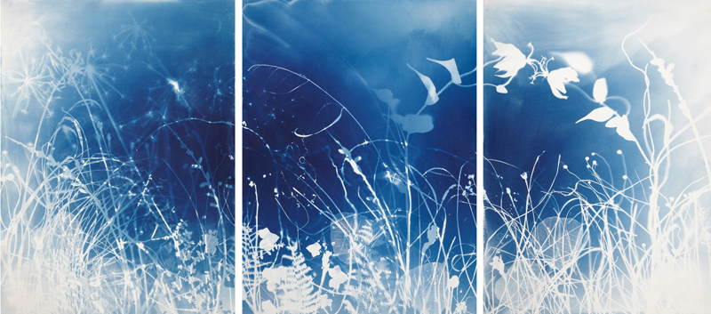The Kiss of Peace, Triptych, 2016. Cyanotype on paper, each 76cm x 56cm